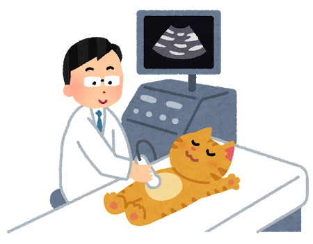 くめ鍼灸整骨院では猫にエコー検査はできません!